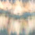 Tree Sails by Ramona duHoux